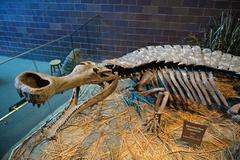 Sarcosuchus skeleton at the Children's Museum of Indianapolis Kuvituskuvat