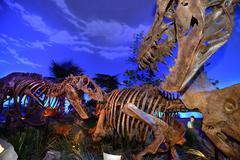 Dinosaur Exibit Kuvituskuvat