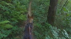 Walking in the forest with the dog on a leash Stock Footage