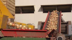 Onion transportation conveyor - food vegetables storage processing Stock Footage