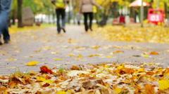 Beautiful nature scene of Autumn Leaves Stock Footage