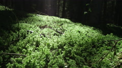 Green moss in shady underwood Stock Footage