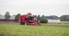 Harvesting beet crop, agriculture Europe, Netherlands, 4K Stock Footage