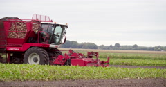 Harvesting beet crop, agriculture Europe, Netherlands, 4K Stock Footage