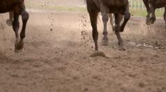 Herd of Horses Raises Dust. Slow Motion Stock Footage