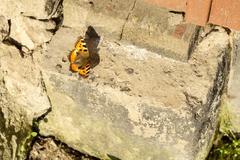 Orange Butterfly on Concrete Stock Photos
