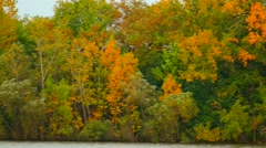 Graceful slow motion flying Canadian Geese with colorful autumn trees Stock Footage