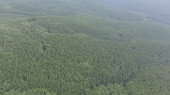 A huge pine forest. aerial footage Stock Footage