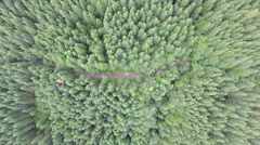 Forest with a bird's eye view Stock Footage