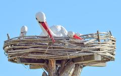 Toy nest of a stork with birds on it Stock Photos