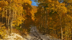 Snowy road golden fall aspen trees quaking in the wind Stock Footage