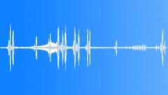 Tasmanian Garden Ambience, Distinctive Bird Singing Nearby, Distant Traffic Sound Effect
