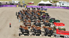 Judges review six-horse hitch draft horse competition at local fall Stock Footage