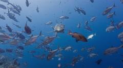 Shark swims at camera 4K Stock Footage