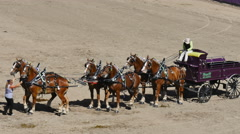 First place team in six-horse hitch draft horse competition Stock Footage