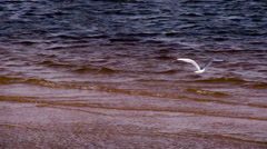 Seagulls Over the Surf HD Pro Stock Footage