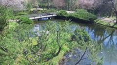 Ducks swim by pond among plants in japanese garden Stock Footage