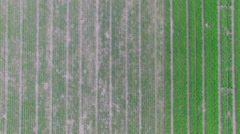 Rows of seedbeds on experimental field at spring day. Aerial view Stock Footage