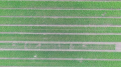 Farm field with lines of seedbeds at spring day. Aerial view Stock Footage