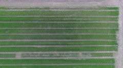 Experimental field with rows of plants at spring day. Aerial view Stock Footage