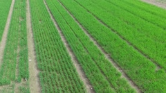 Experimental farm field with green sprouts not far from city houses Stock Footage