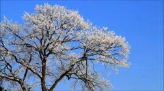 Winter scene, trees in hoarfrost Stock Footage