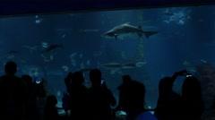 Fish in the aquarium in Barcelona Stock Footage