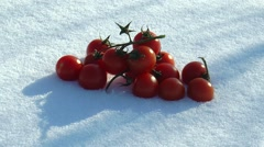 On the snow is a branch of cherry tomatoes. Stock Footage