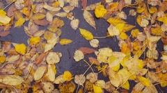 Female feet in black boots and jeans go through puddle on autumn leaves Stock Footage
