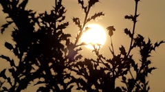 Leaves and Herbs Swaying on the Wind at Yellow Sun Light. Stock Footage
