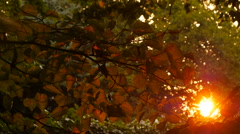 Beautiful out of focus sunset. Sun shine through the blowing on wind leaves Stock Footage