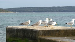 Sea gulls on concrete pier in Croatian sea Stock Footage