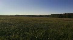 Meadow in autumn light. Stock Footage