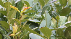Leaves of a bush wet Stock Footage