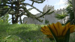Depths of field change from Duino castle to beautiful yellow flower Stock Footage