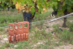 Bio controlled farming wineyards with a new method Stock Photos
