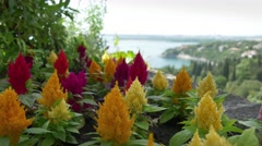 Beautiful colorful flowers on Duino castle terrace Stock Footage