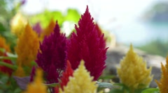 Close-up view of purple flower on Duino castle terrace Stock Footage