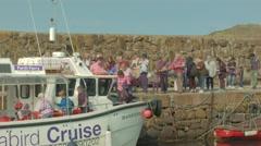 Seafari Explorer, North Berwick Harbour, Scotland Stock Footage