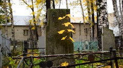 Tombstone And Autumn Maple Stock Footage