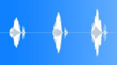 Male Voice Phrase, Saying: Prego!, Italian, V3 Sound Effect