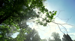 Water spray splashing in spectacular tree illuminated by sunlight in slow motion Stock Footage