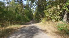 The narrow road in the autumn forest. Aerial view. Stock Footage