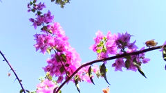 Pink flowers in blue sky Stock Footage