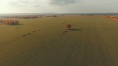 Aerial view of an autumn farm chores. Trees in the middle of the field Stock Footage
