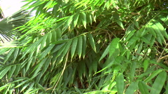 Bamboo Leaves in a Tropical Greenhouse Stock Footage