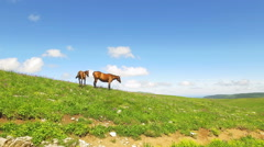 Horse in green meadows Stock Footage