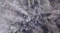 AERIAL: Lush pine trees covered with fresh white snow in winter wonderland Stock Footage
