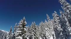 AERIAL: Fresh white snow covering lush green pine trees and mountain foothill Stock Footage