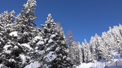 AERIAL: Fresh soft snow covering spruce trees and steep slope of the mountain Stock Footage